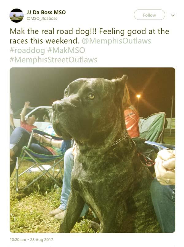 Image of Caption: JJ Da Boss Italian Massif dog named Mak