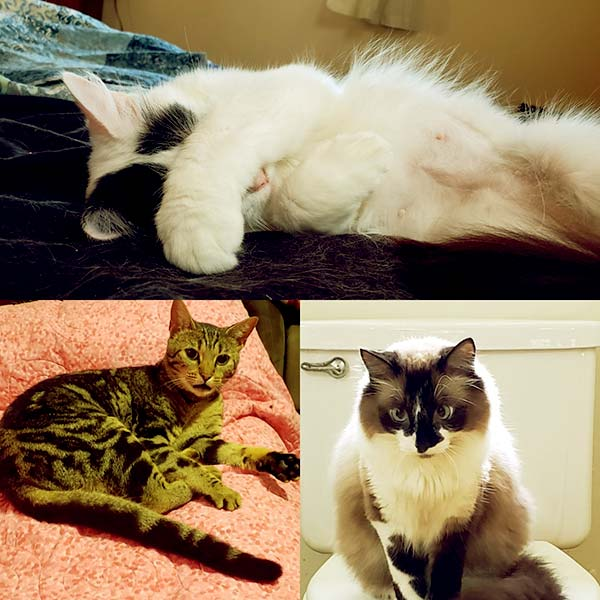 Image of Caption: Diane Pol Jr.'s cats are her children