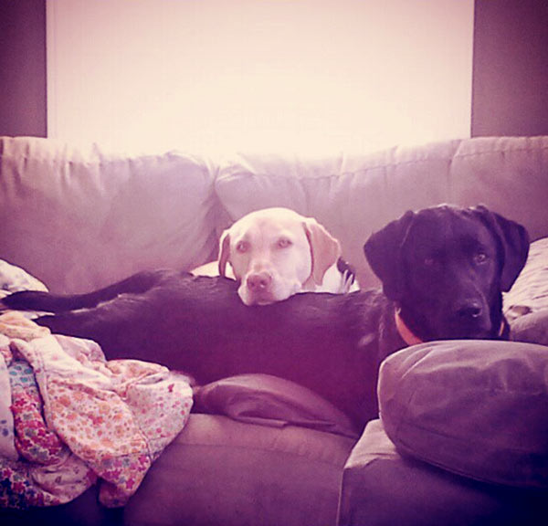 Image of Ashley Morrill's dogs are like her children
